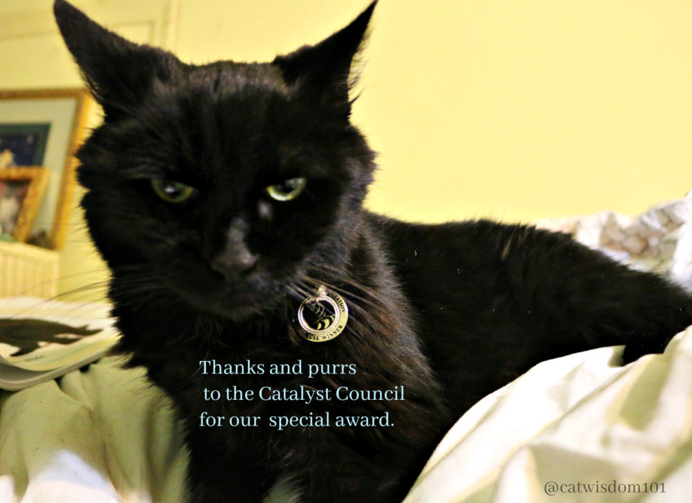 clyde_catalyst_council_catwisdom101