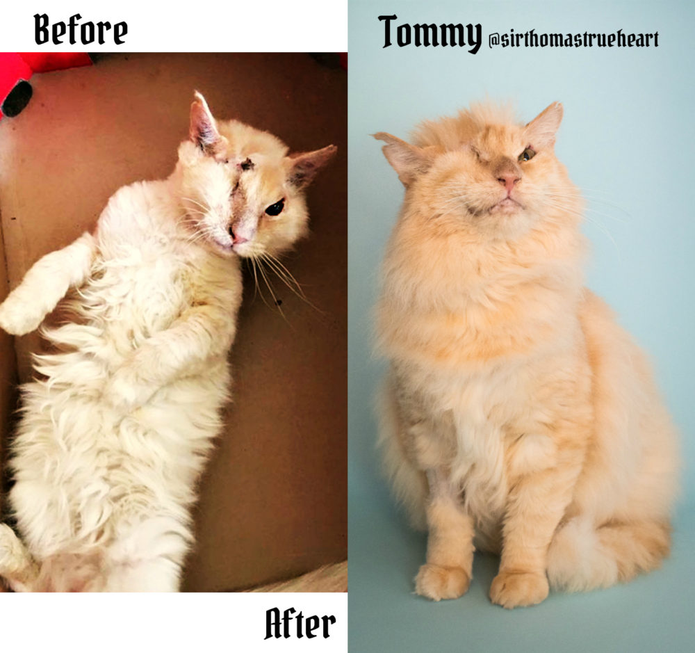 Tommy_cat_before&after