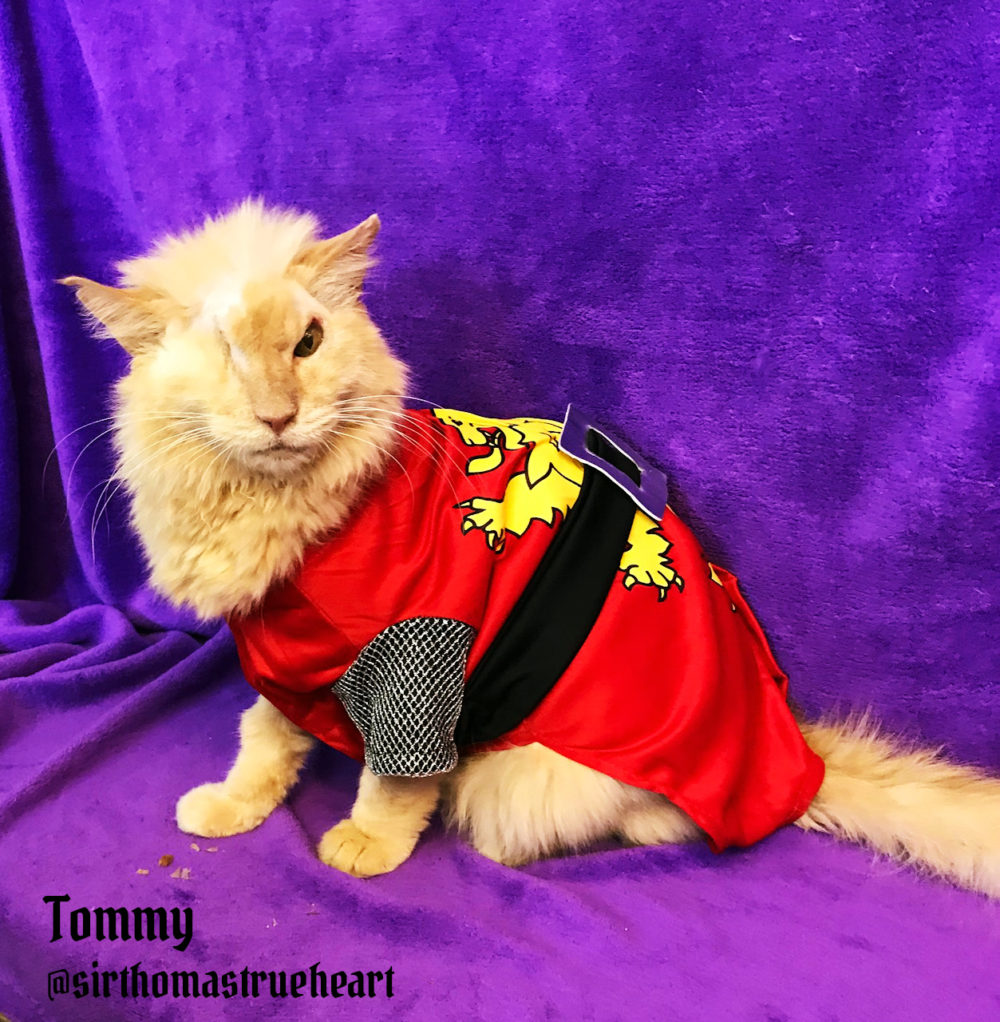 Tommy_hero-cat