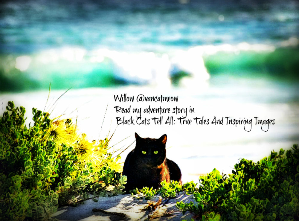 Willow_beach_catwisdom101