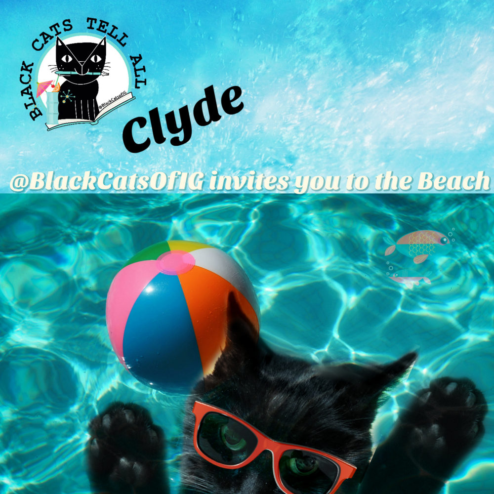 beach_Swim__clyde_catwisdom101