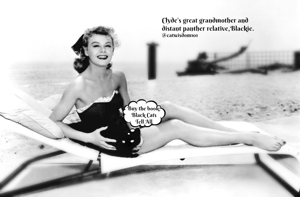 beach__black_cat_vintage_catwisdom101