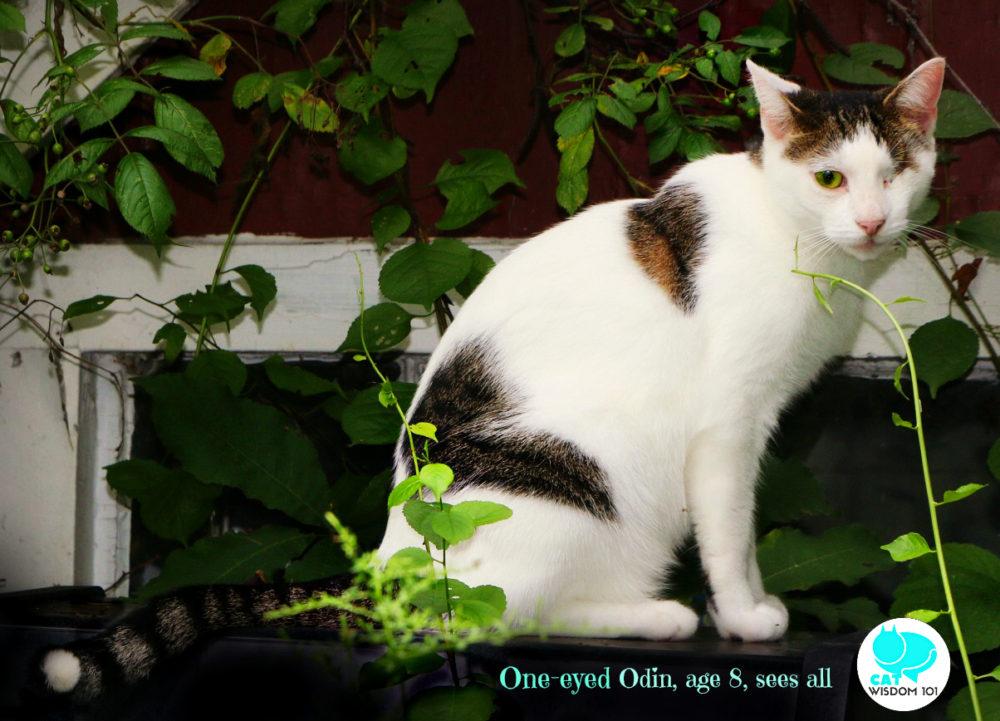 one-eyed_cat_odin_catwisdom101
