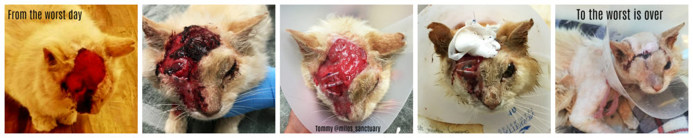 tommy_acid_attack_milos_sanctuary