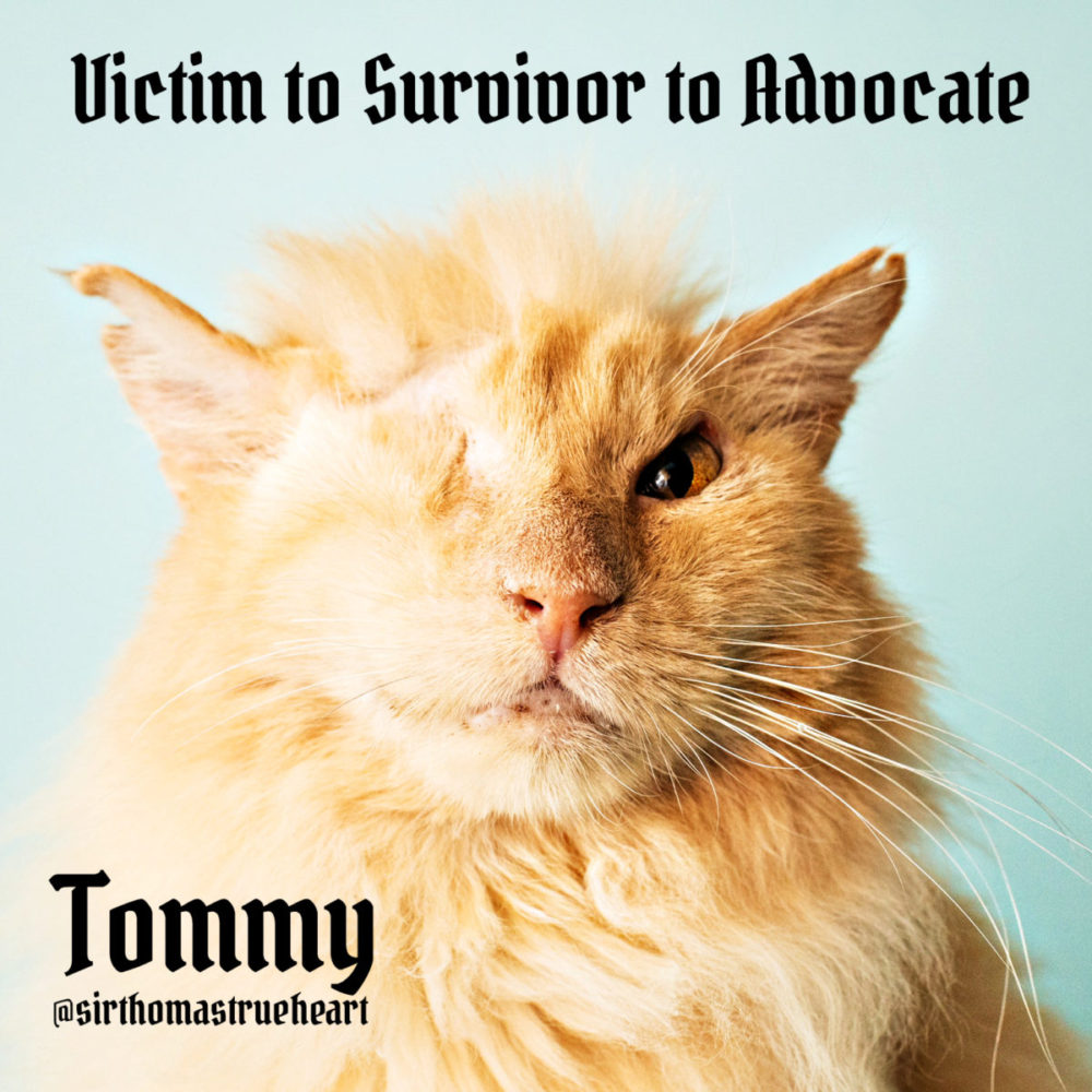 Tommy: From Animal Cruelty Survivor to Sir Thomas Trueheart CatCon Star & Advocate