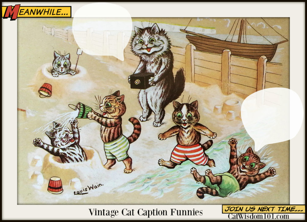vintage_cats_beach Funny Cats Gone Fishing For Catnip