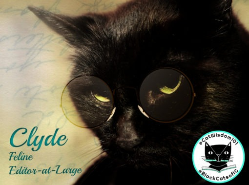 Clyde_Black_cat_wisdom