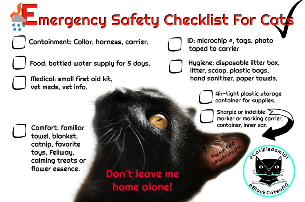 "black_cat_emergency_checklist_catwisdom101 ""1351 x 896"""