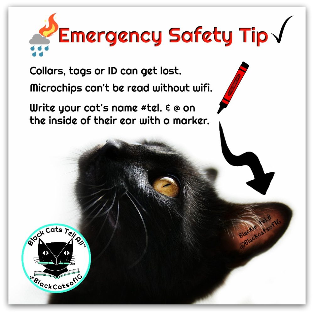 black_cat_emergency_Tip_catwisdom101