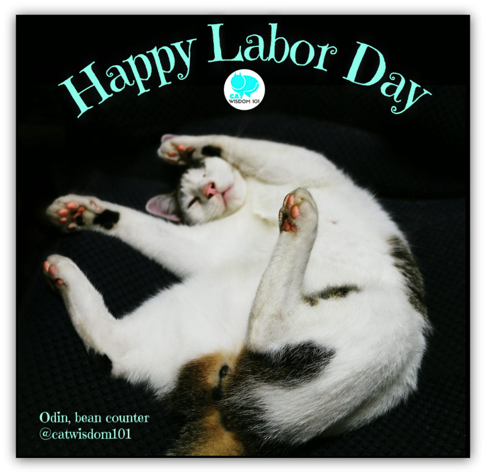 labor_day_cat_odin_catwisdom101