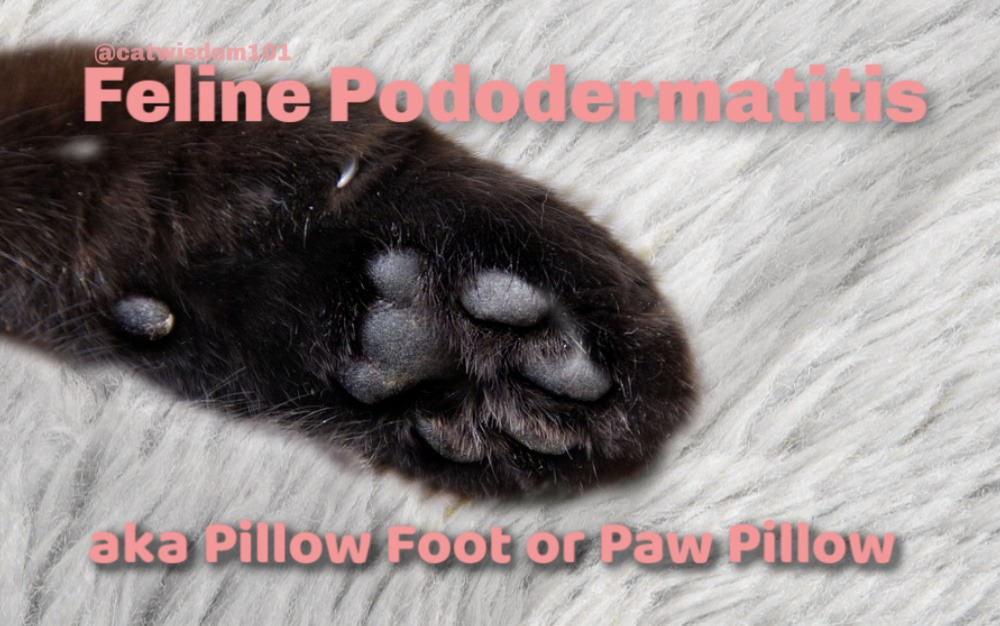 pillow-paw_cat