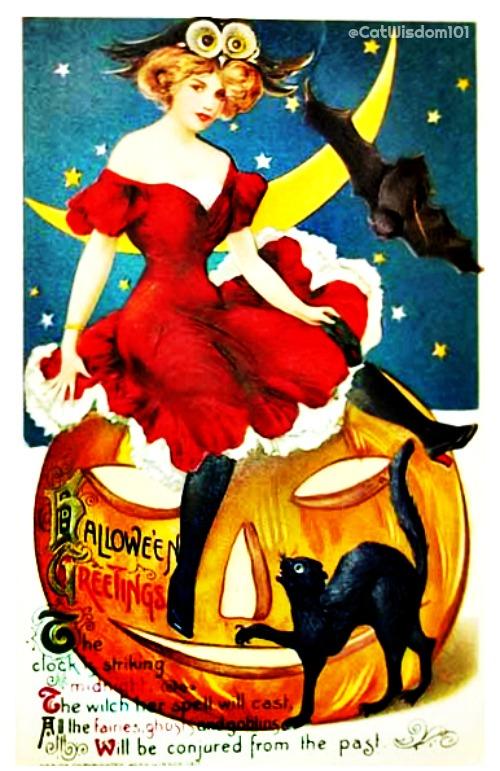 Halloween_witch-owl_catwisdom101