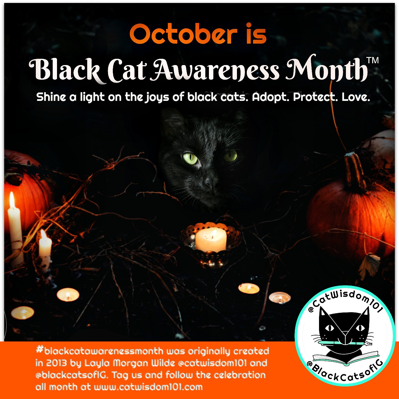 Our Cat Black Cat Awareness Holiday Is Official