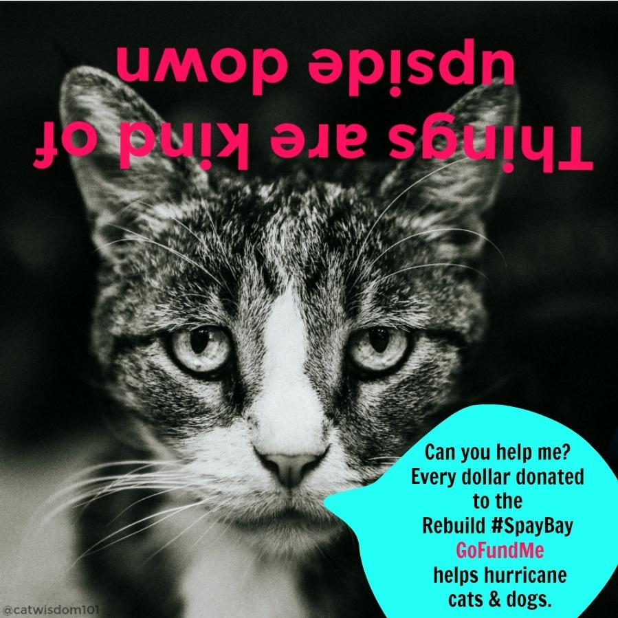 catwisdom101_gofundme_#spaybay