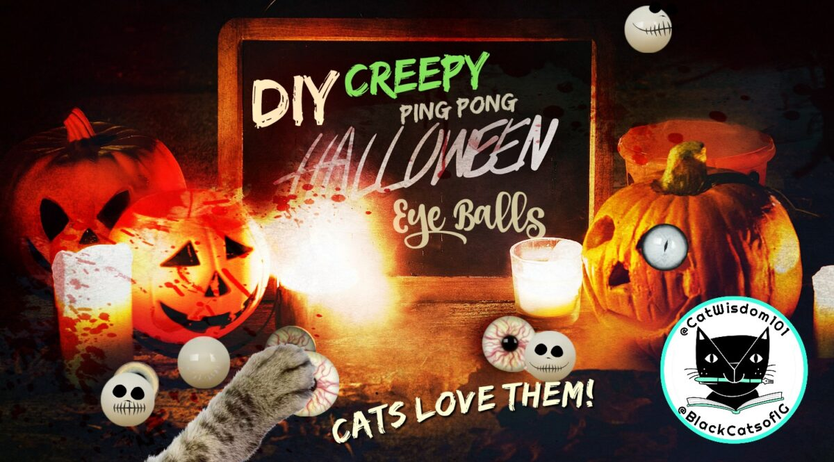 DIY Easy Halloween Eyeballs Cats Love