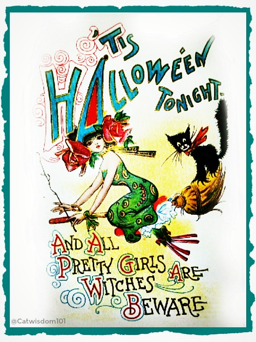 halloween_broom_vintage_witch_catwisdom101