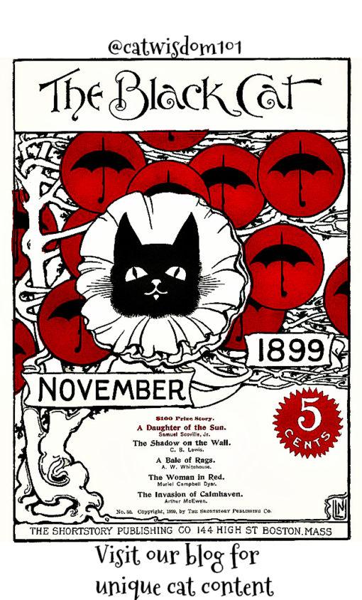 Black-Cat-1899-November-510x844 Purrfect Black Cat Names E-Book And Expert Naming Tips