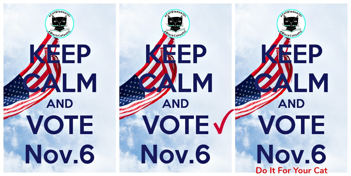 keep_calm_vote_catwisdom101_cats