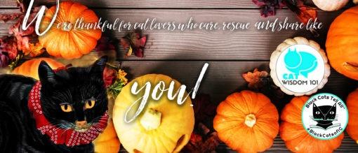 pumpkins_thanksgiving_catwisdom101