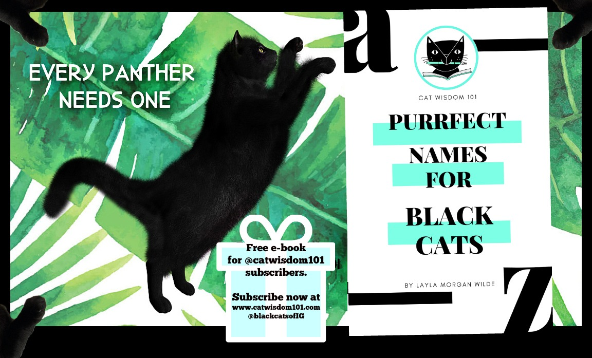 Purrfect Black Cat Names E-Book And Expert Naming Tips