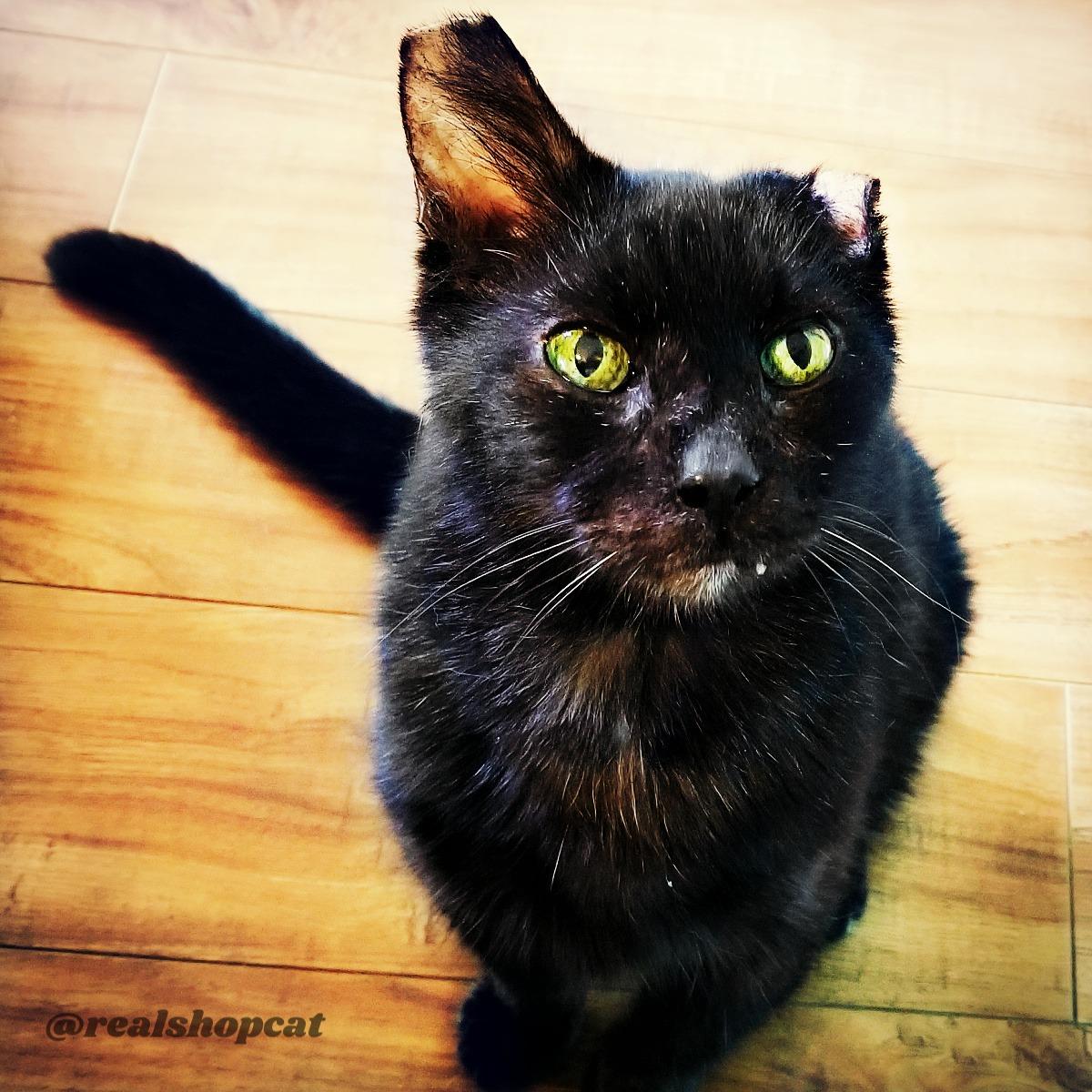 shoppy-realshopcat_adopt_seniors_pet_month Real Shop Cat Inspires Senior Adoption