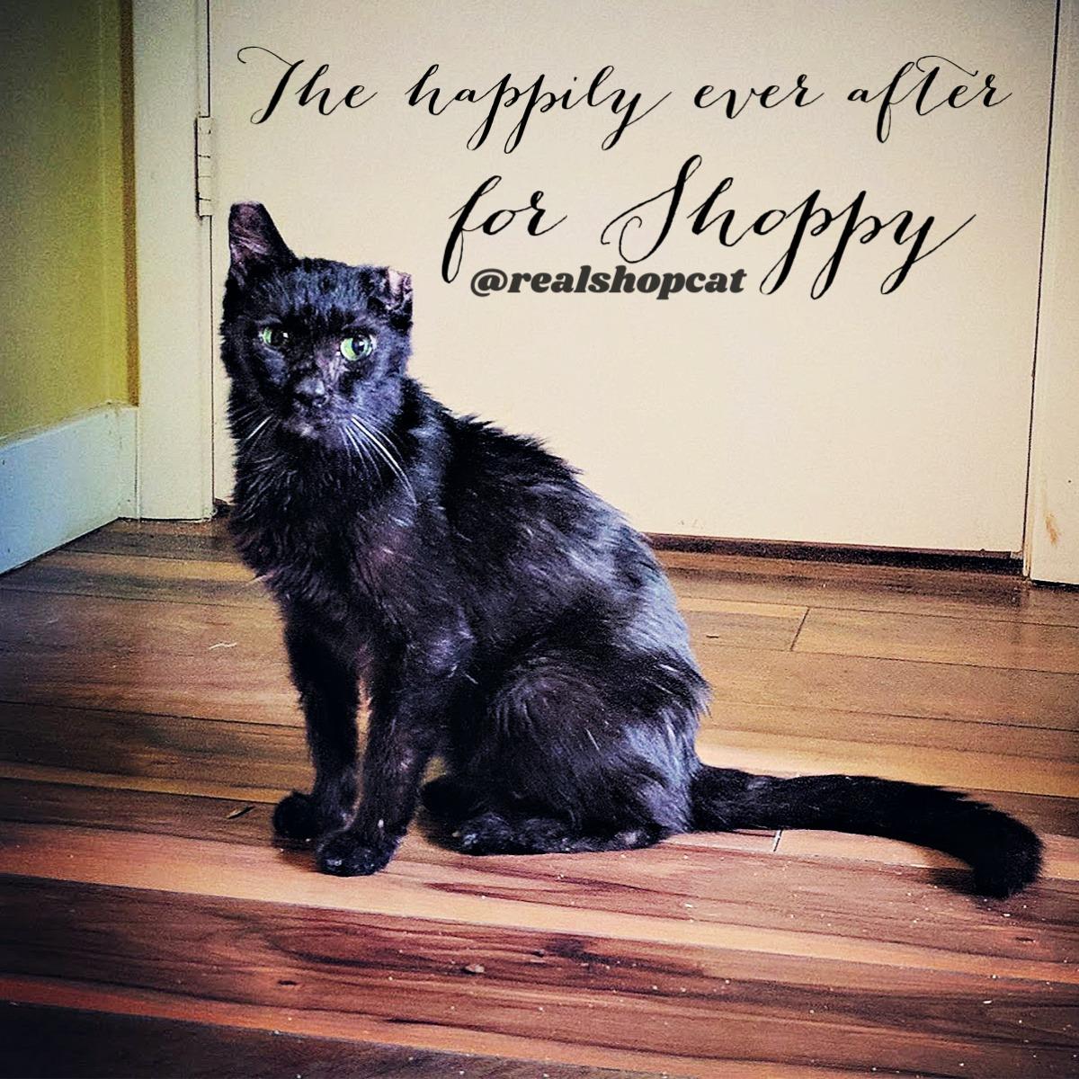 shoppy_realshopcat_catwisdom101