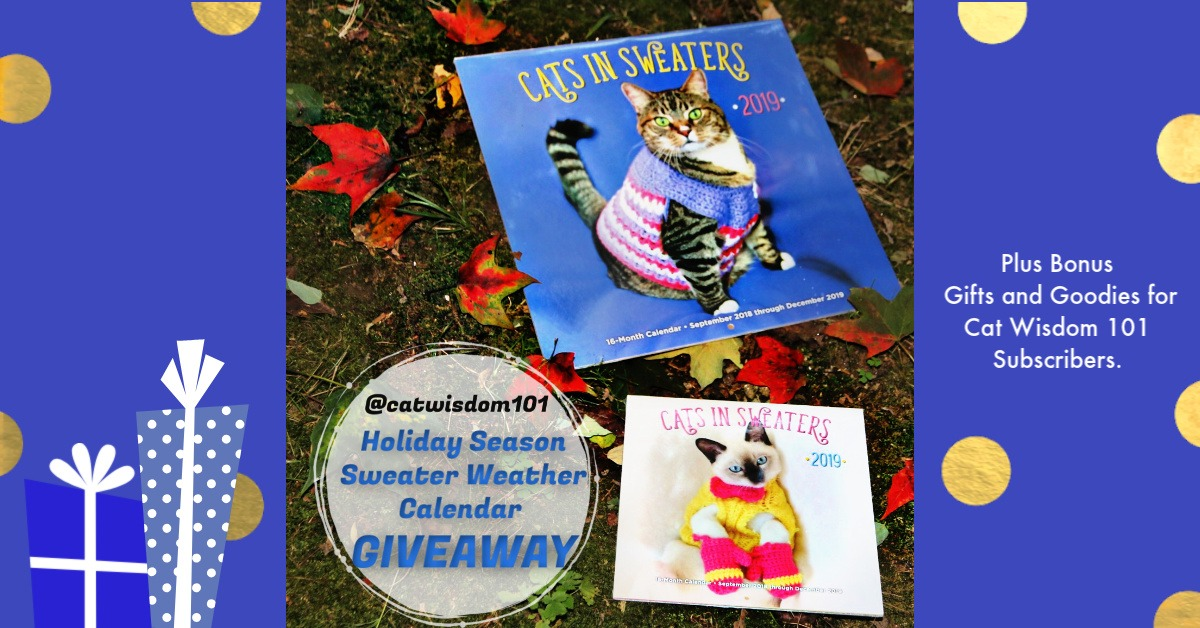Cute Instagram Sweater Weather Cats + Cat Calendar Giveaway
