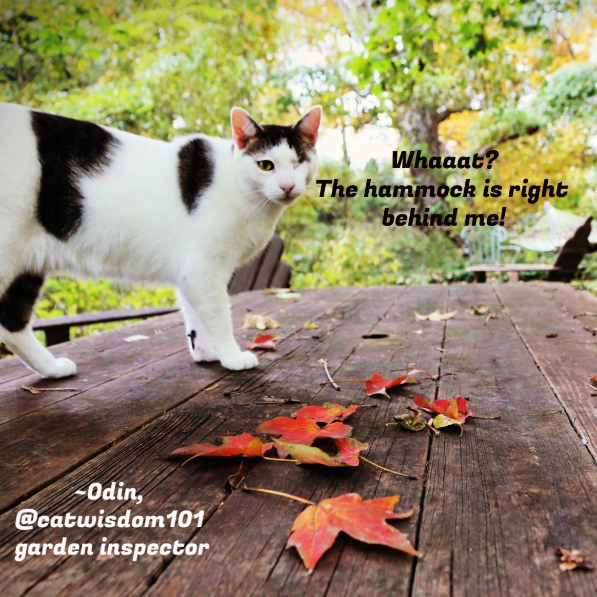Odin_fall_catwisdom101