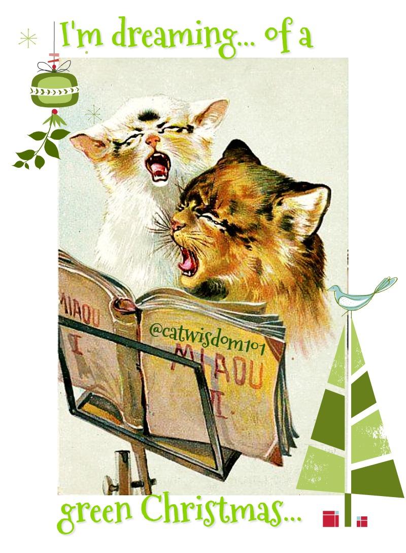 catnip_karaoke_christmas_catwisdom101 Cat Wisdom 101 Catnip Karaoke Christmas Carols