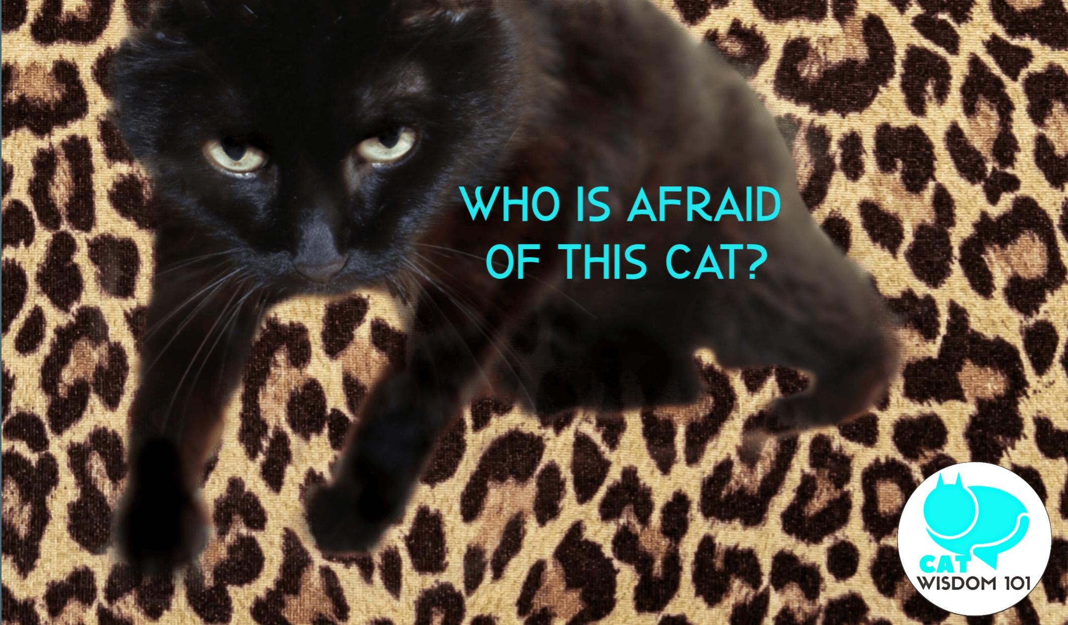 clyde_yoga_black cat_drama_catwisdom101