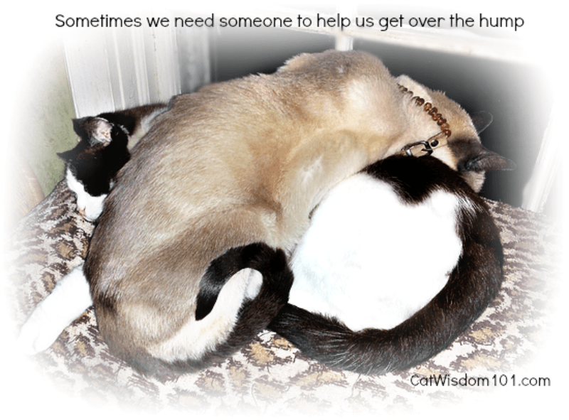 merlin_domino_funny_cats_catwisdom101