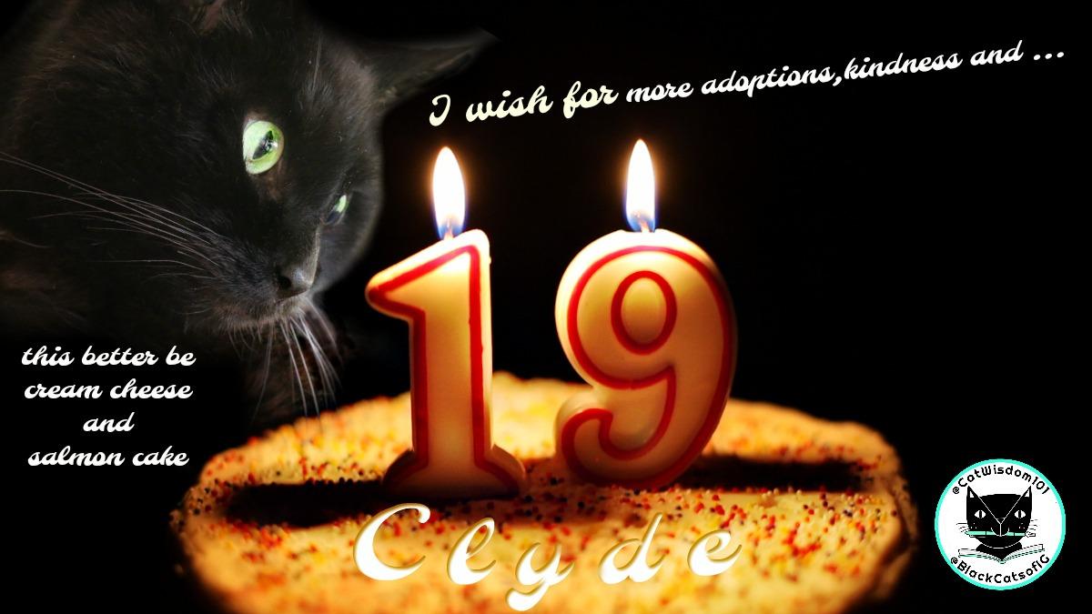 19th_birthday_clyde_catwisdom101