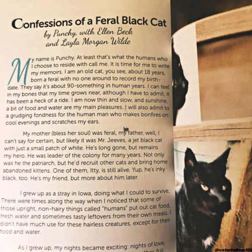 Punchy_blackcatstellall_cat_book