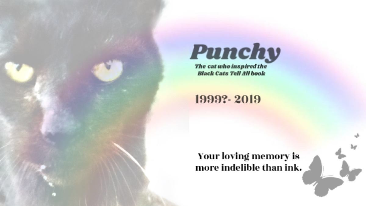 RIP Punchy, The Feral Who Inspired Black Cats Tell All Book