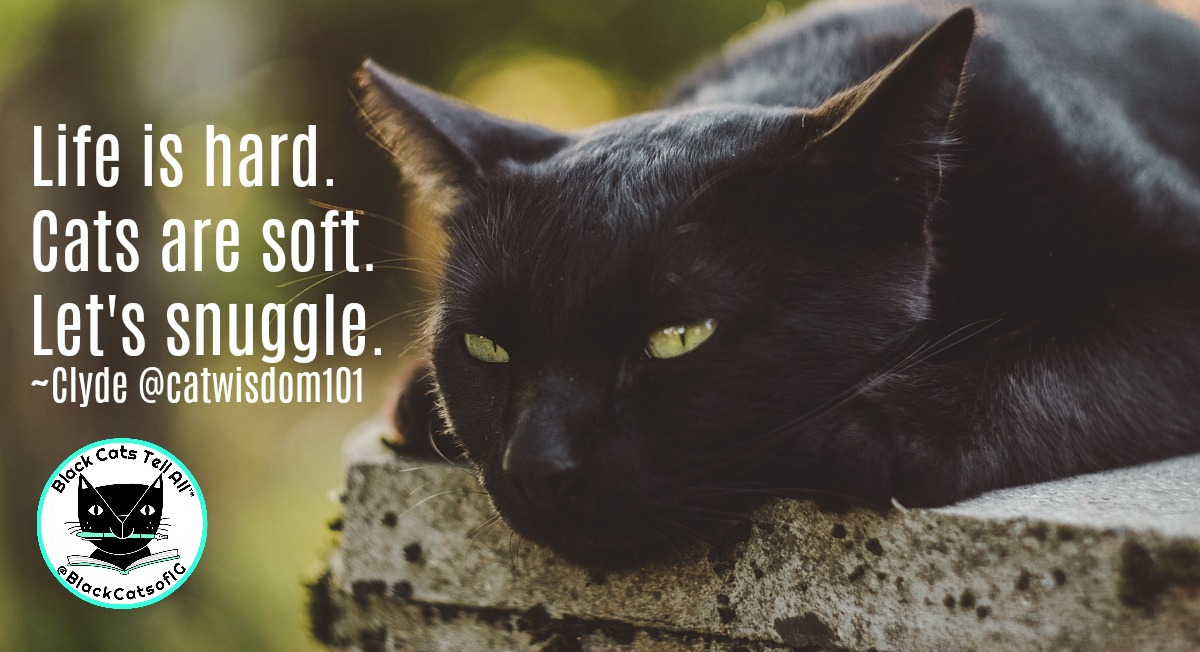 black_cat_life_catwisdom101