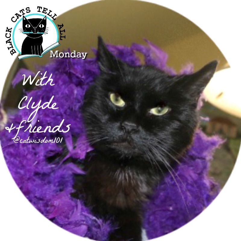 black_cats_tell_all_monday