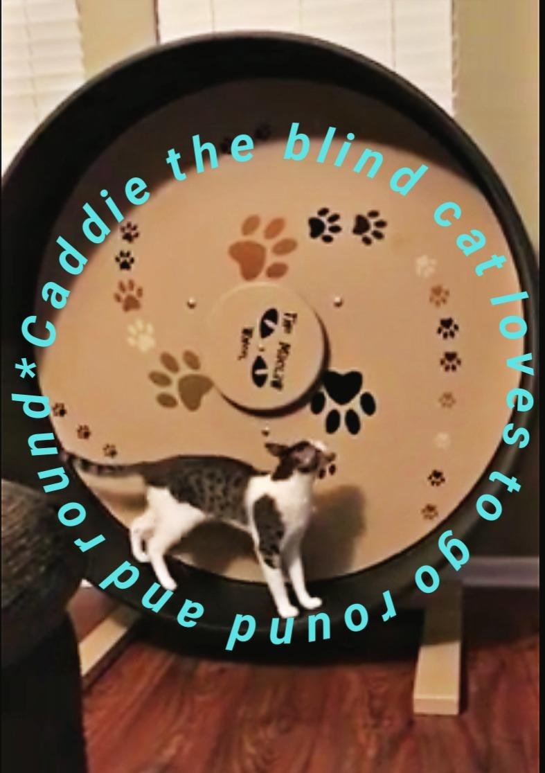 caddie_blind_cat_maclaw_catwisdom101