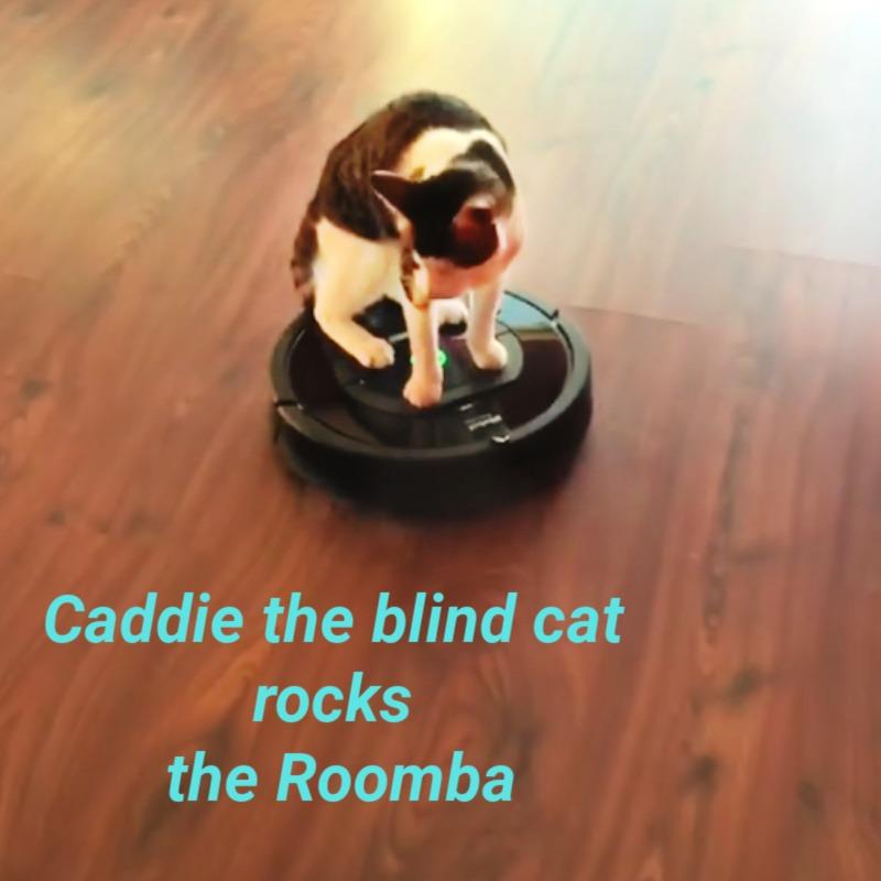 caddie_blind_cat_roomba_catwisdom101