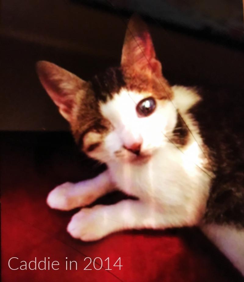 caddie_one_eyed_kitten_catwisdom101