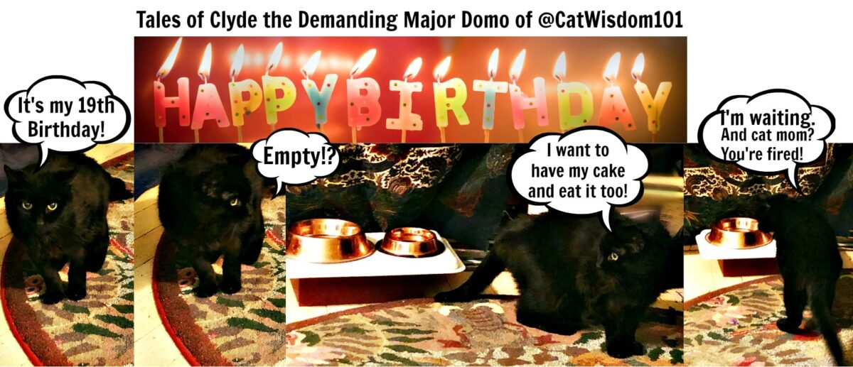 clyde_birthday_catwisdom101_19