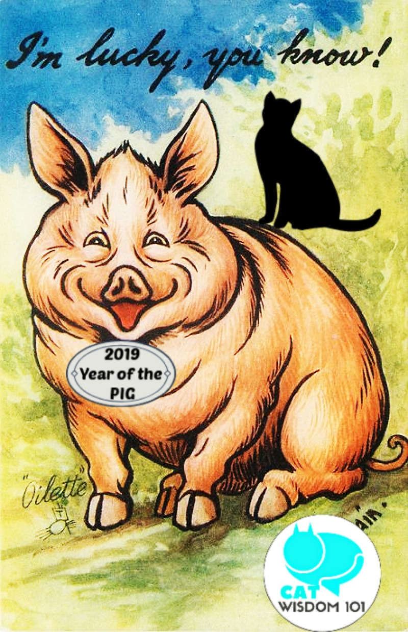 lucky_pig_year_catwisdom101