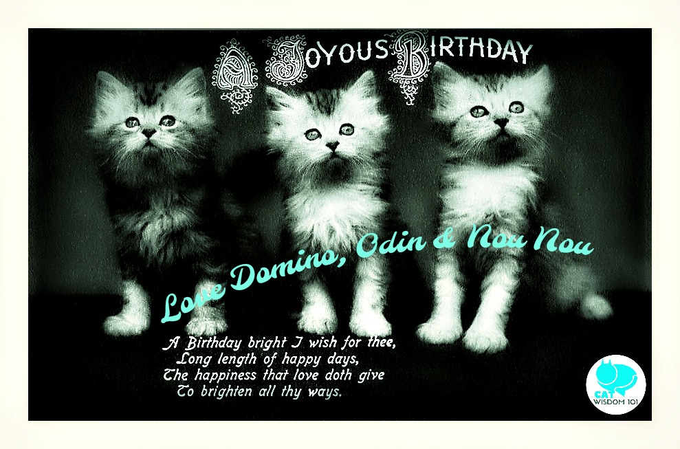 vintage_kitten_birthday_catwisdom101