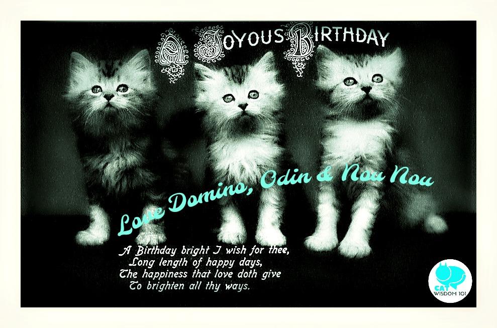 vintage_kitten_birthday_catwisdom101