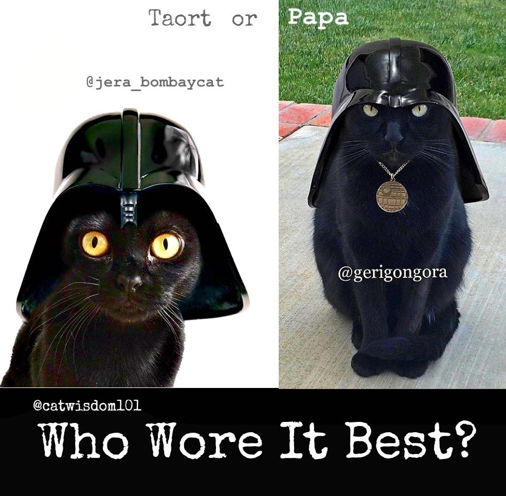 who wore it best_catwisdom101