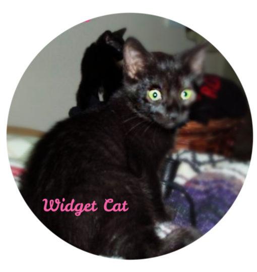 widget_cat