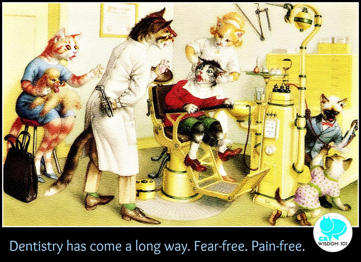 dentist_cats_vintage_catwisdom101