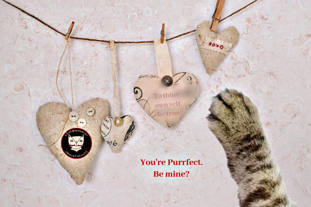 hearts_valentine_paw_catwisdom101