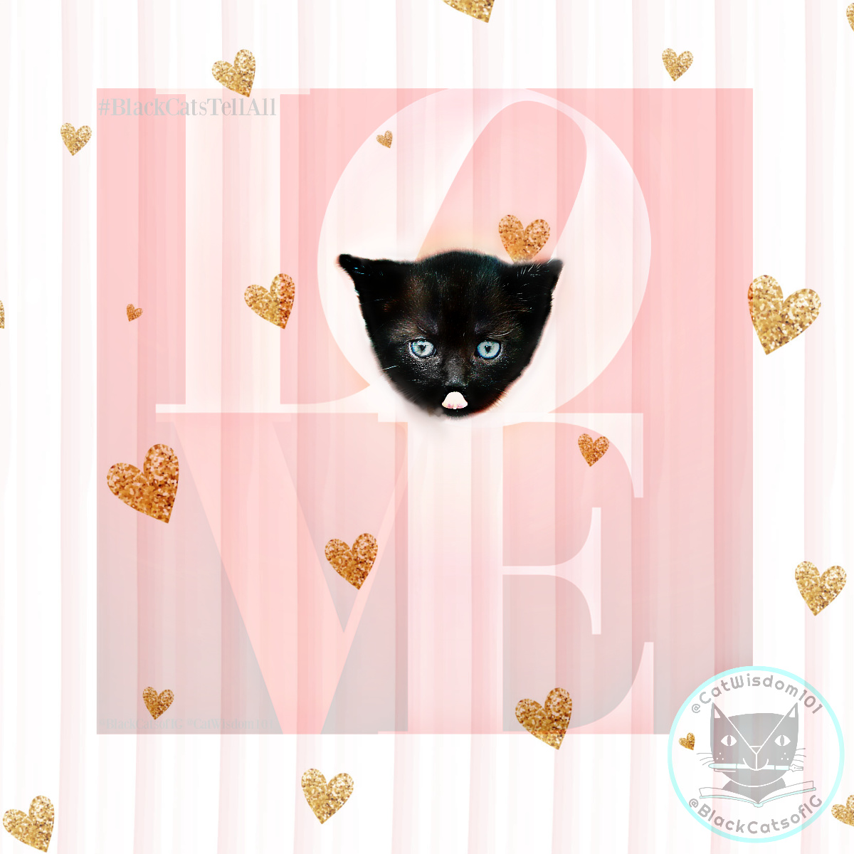 love_valentine_black_cat