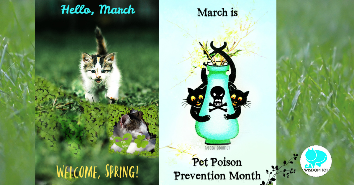 March Madness Cats and Pet Holidays