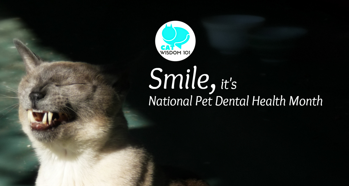 merlin_smile_dental_month_catwisdom101 Timely must-read Dental Advice About Cats